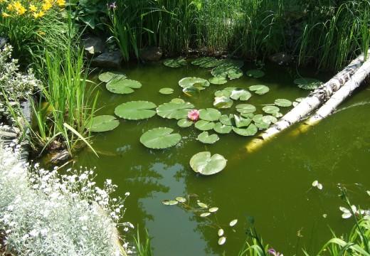 Comment installer un étang ?