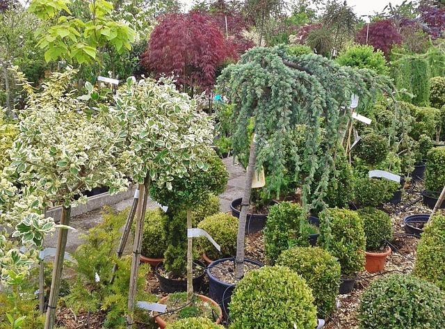 coaching jardin paysager
