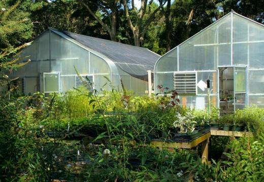Les arbustes décoratifs : caractéristiques et fertilisation