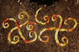 land-art-epluchure