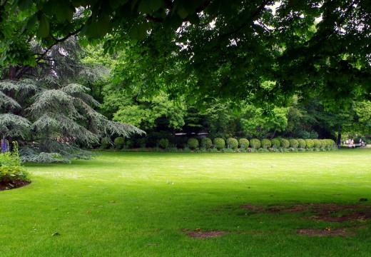 Comment transformer un terrain en friche en un beau jardin ?