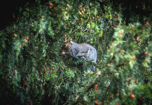 Protéger les petits animaux et les insectes du jardin