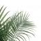 Palmiers : ce qu'il faut savoir avant d'en planter dans votre jardin