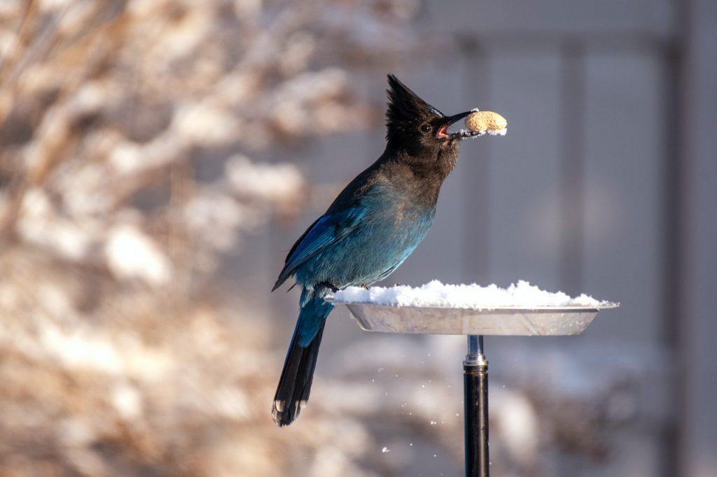 Oiseau dans une mangeoire