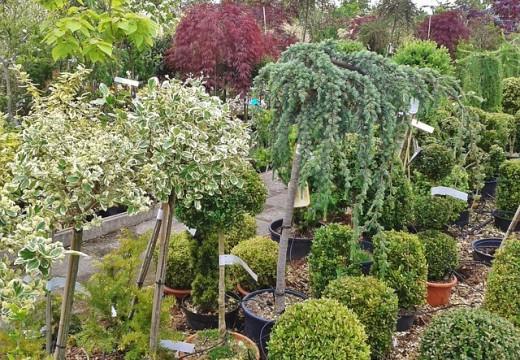 Les arbustes à feuillage persistant et l'aménagement paysager
