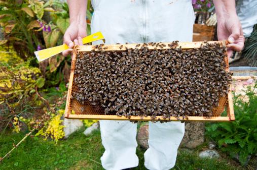 Installer une ruche dans son jardin : que faut-il savoir ?