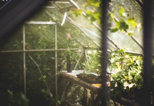 Jardiner toute l'année sous serre et tunnel